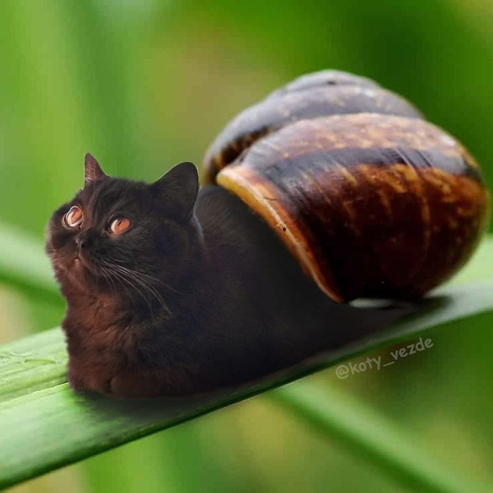 photoshopped cat faces koty vezde snail