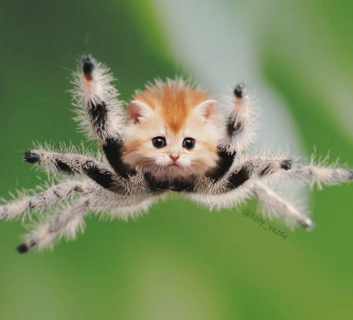 photoshopped cat faces koty vezde spider