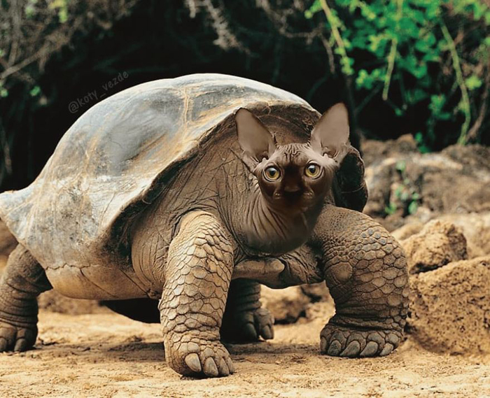 photoshopped cat faces koty vezde turtle