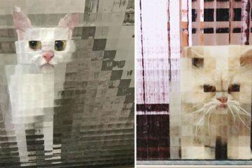 pixel cats