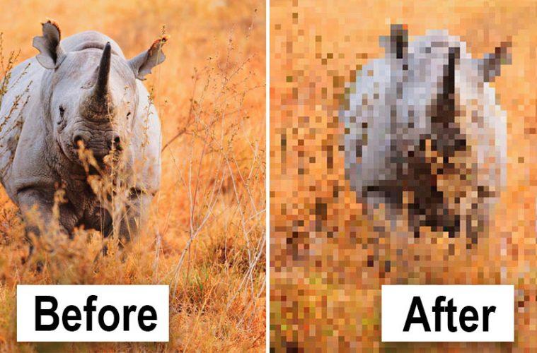 pixel pictures of animals