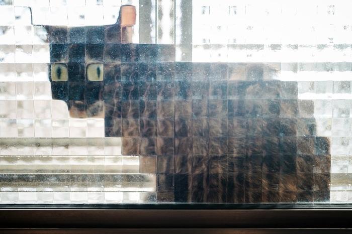 real life pixel cats 1