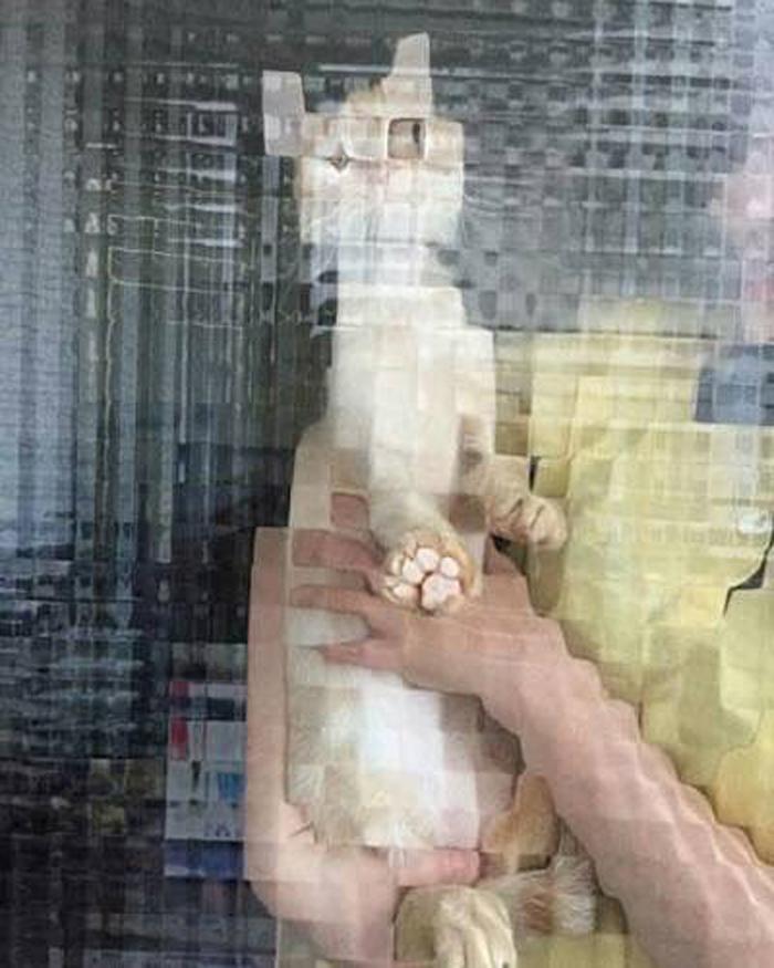 real life pixel cats 12