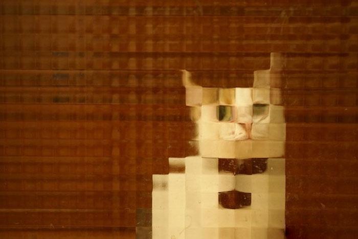 real life pixel cats 15