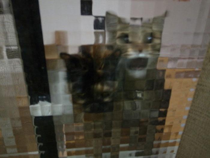 real life pixel cats 16
