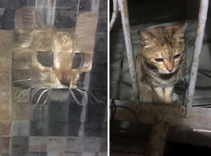 real life pixel cats 17
