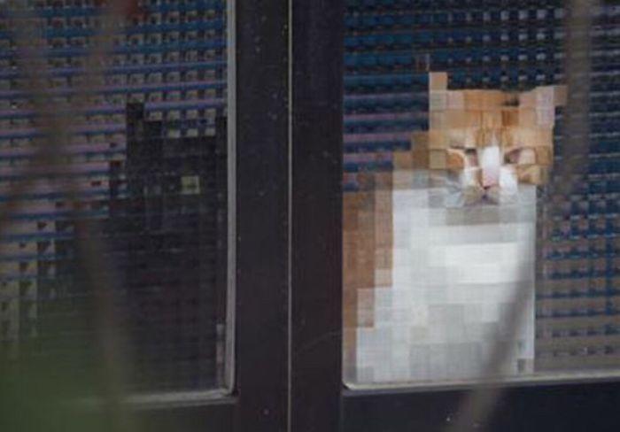 real life pixel cats 18
