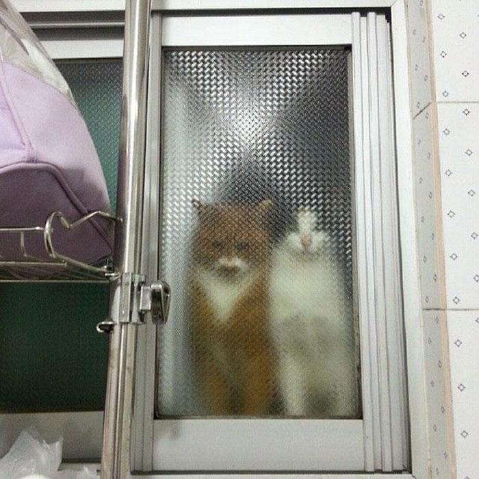real life pixel cats 19
