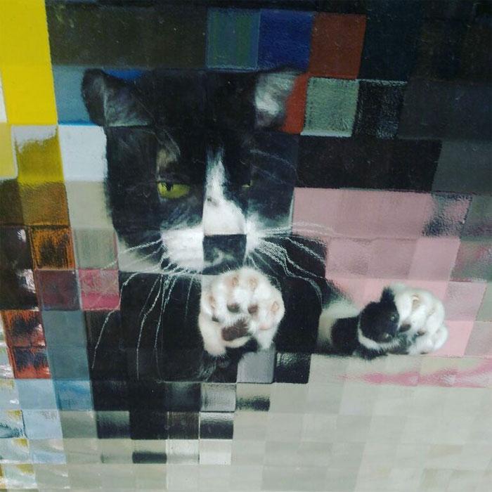real life pixel cats 20