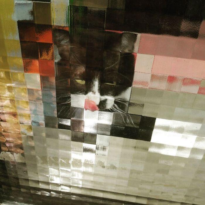 real life pixel cats 21