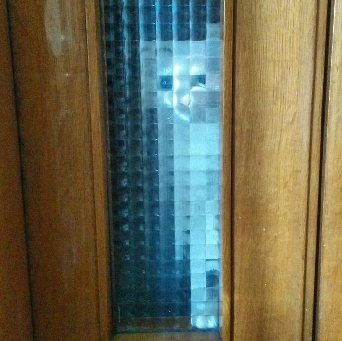 real life pixel cats 22