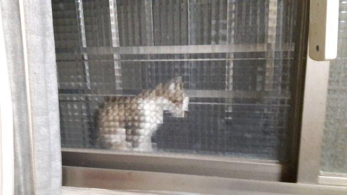 real life pixel cats 23