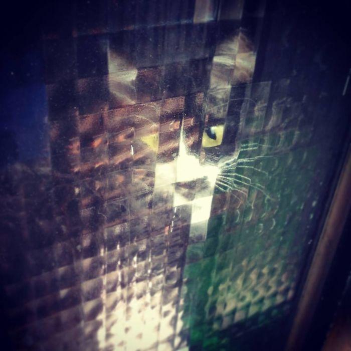 real life pixel cats 24
