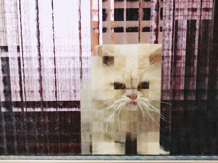 real life pixel cats 5