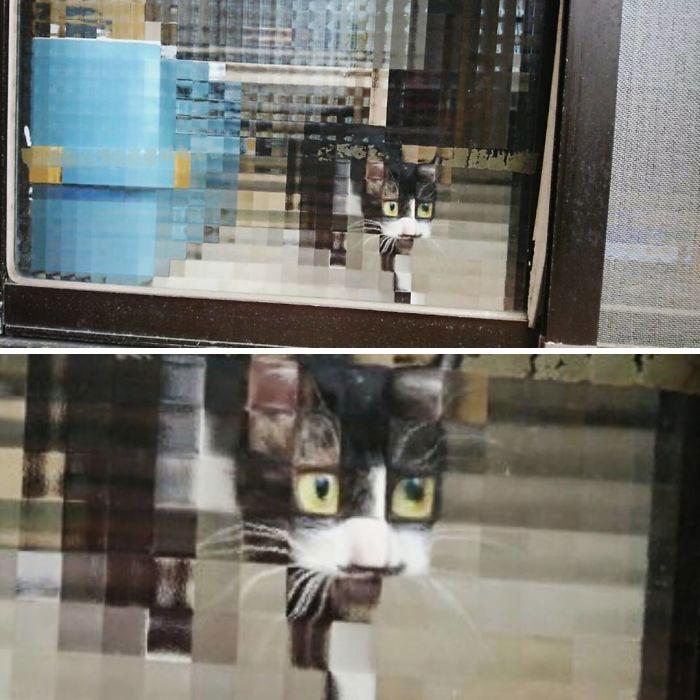 real life pixel cats 6