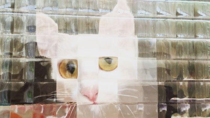 real life pixel cats 9
