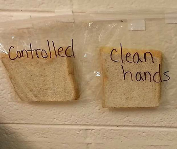 slices of bread used in the clean hands science experiment