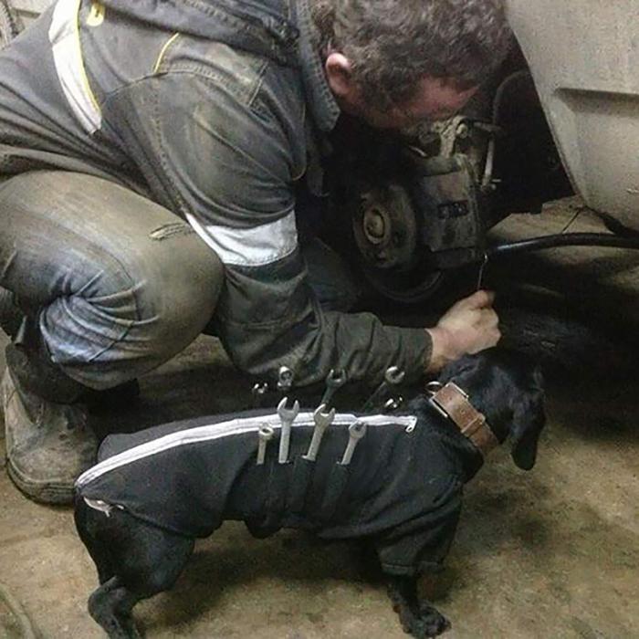 working dog tool jacket
