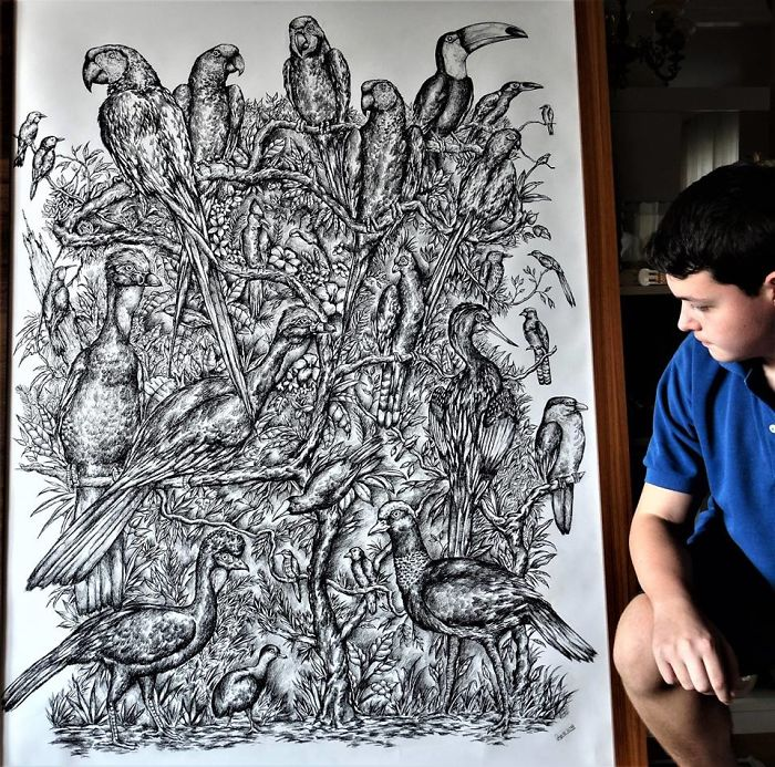 Birds Drawing by Krtolica 2