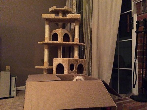 Cat Peeking from a Box