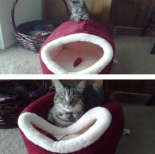 Cat Sitting Outside Its Bed