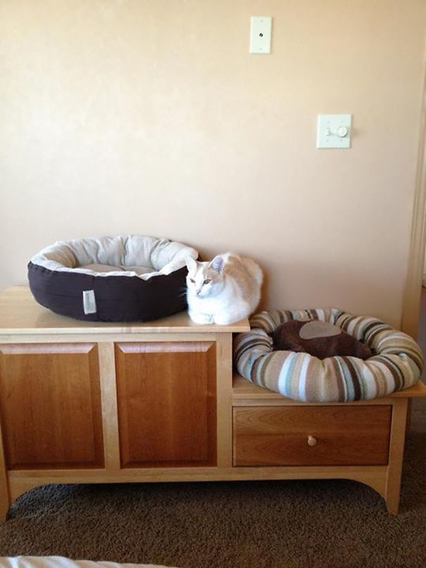 Cat Sitting in Between Two Cat Beds