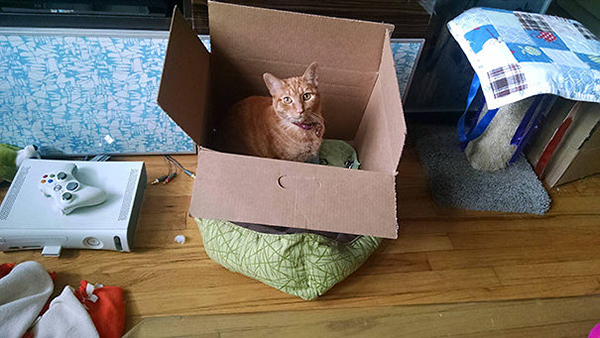 Cat Sitting on Its Bed with a Box