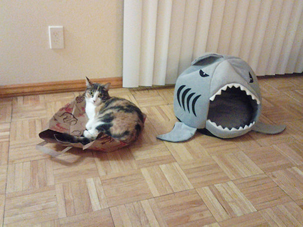 Cat Sitting on Top of a Paperbag Instead of Its Shark Bed