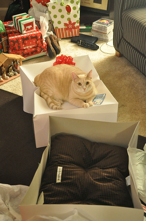 Cat Sitting on a Giftbox