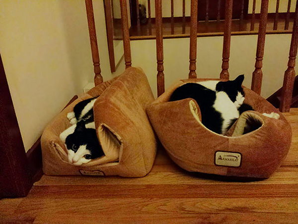 Cats Lying on Their Beds Instead of Inside It