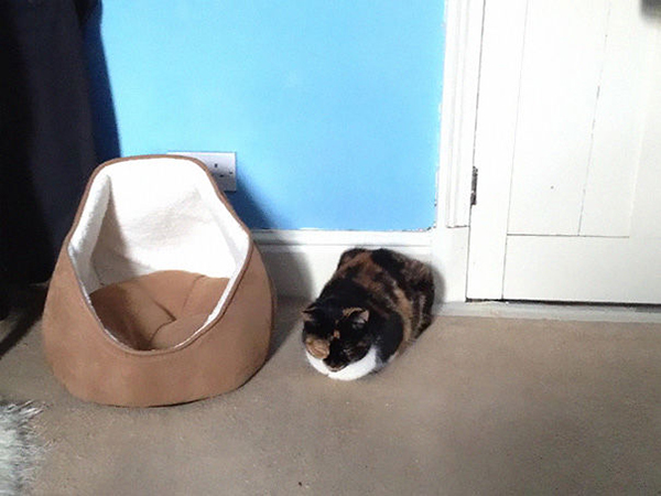 Dark Brown Cat Sleeping Outside Its Bed