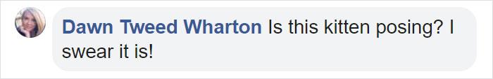 Dawn Tweed Wharton Facebook Comment