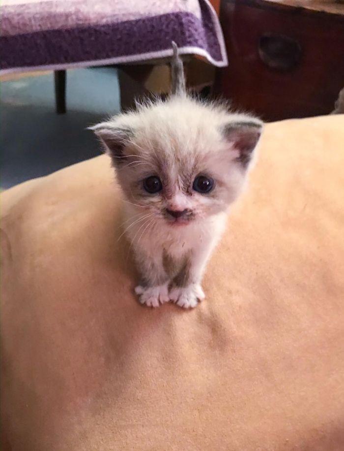Kitten on Beige Couch