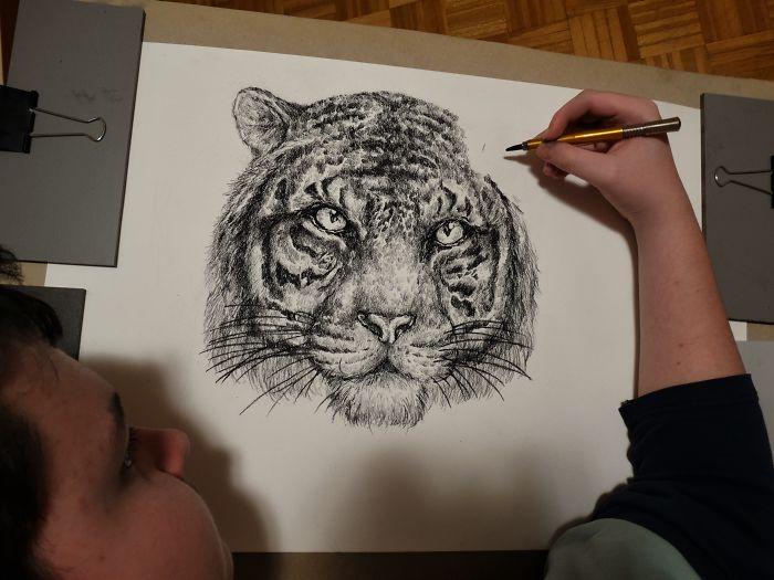 Krtolica's Tiger Drawing in Progress