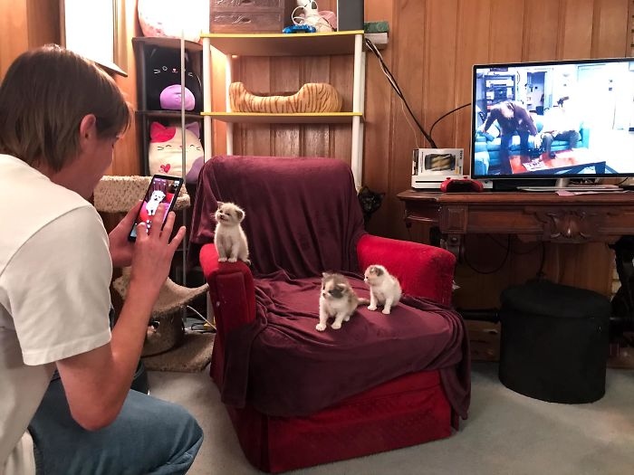 Man Taking a Photo of Three Kittens on Couch