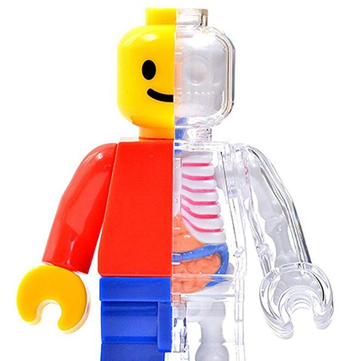 anatomical lego brick man detail