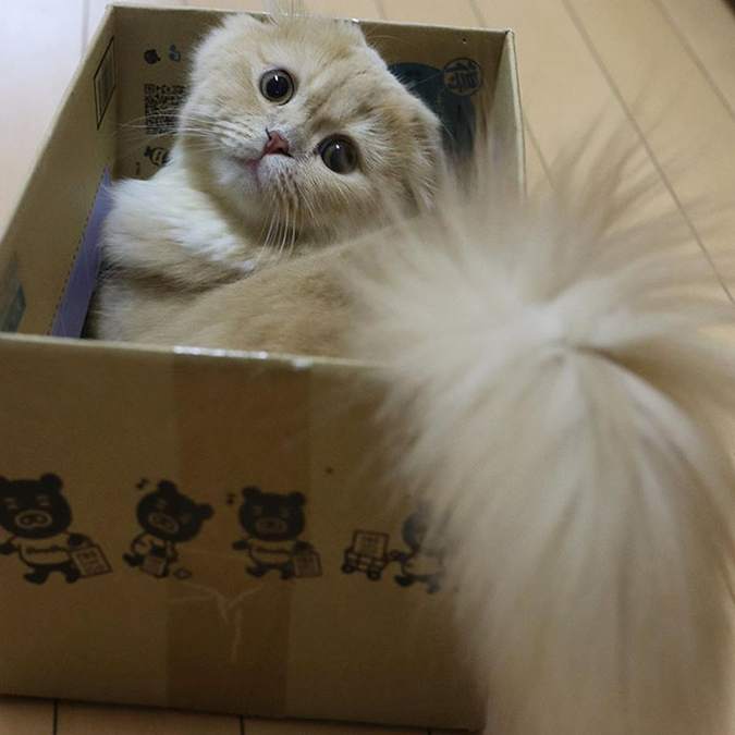 bell the cat in a small box