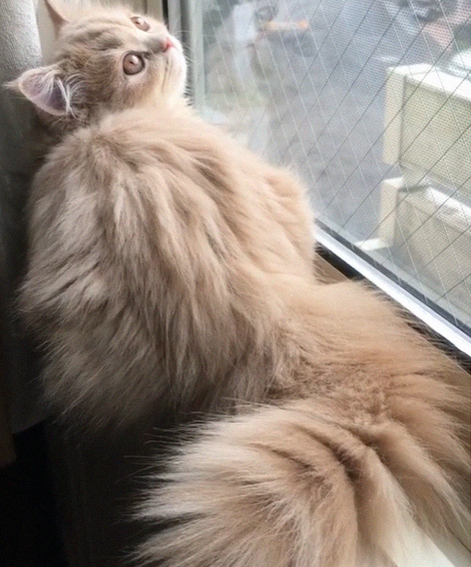 bell the cat lays by window