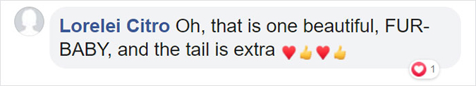 comment about bell the cat that tail is extra