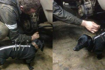dog tool jacket