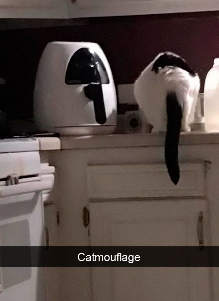 funny kitty memes camouflage