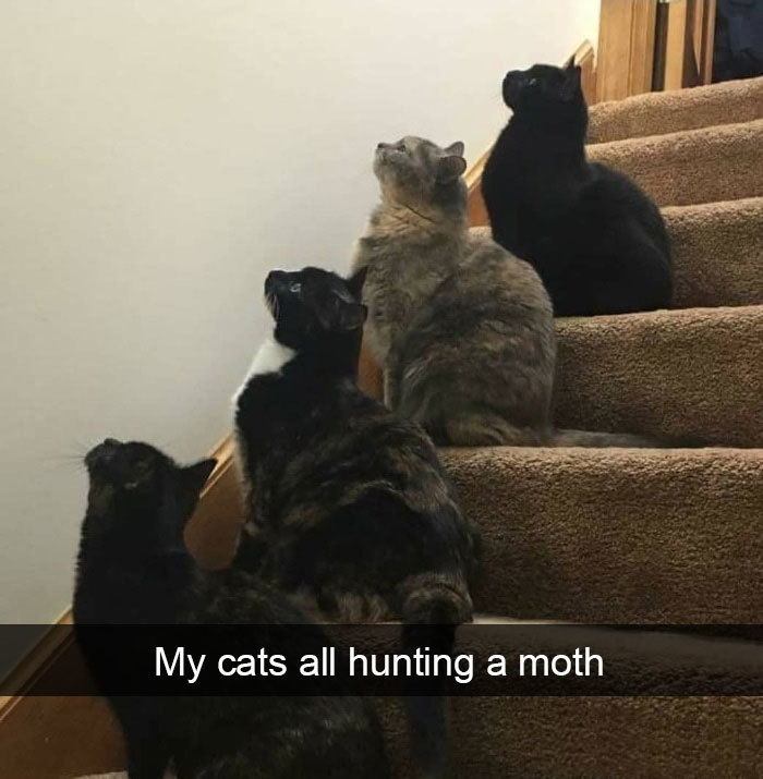funny kitty memes moth hunters