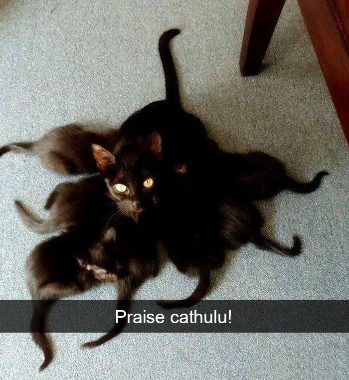 funny kitty memes praise cathulu