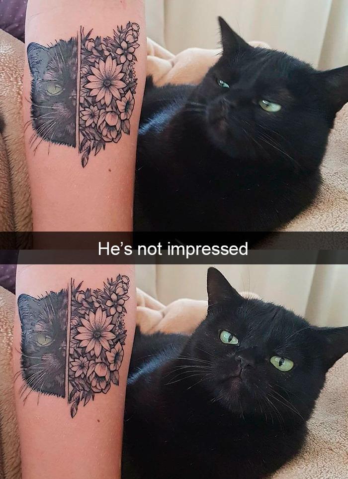 funny kitty memes tattoo