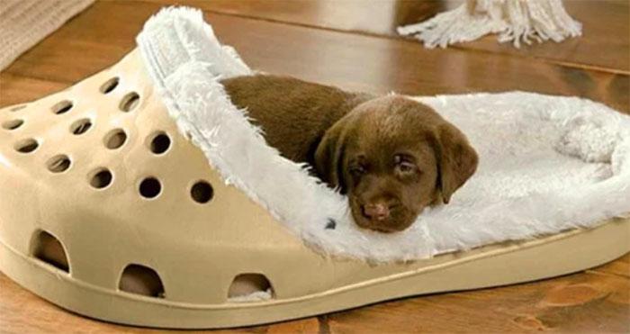 giant slipper dog bed