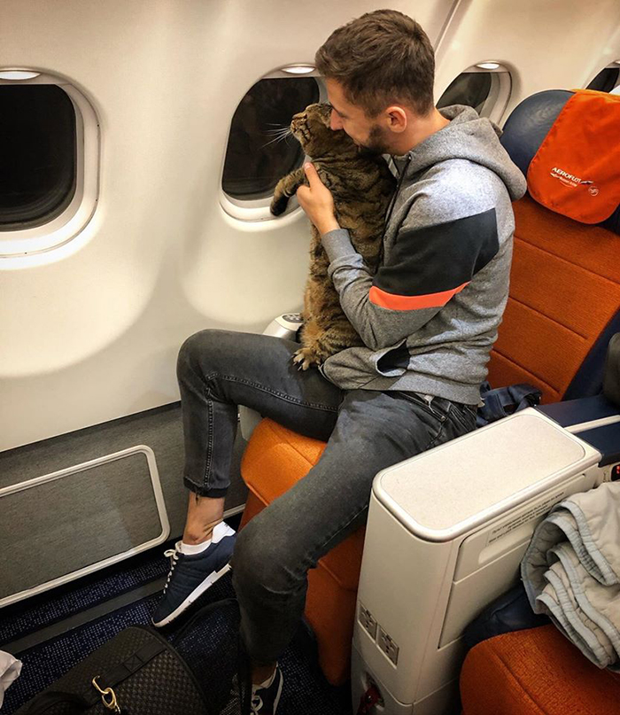 guy sneaks fat cat on flight