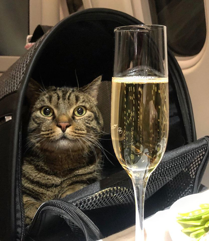 guy tried to sneak overweight cat on flight