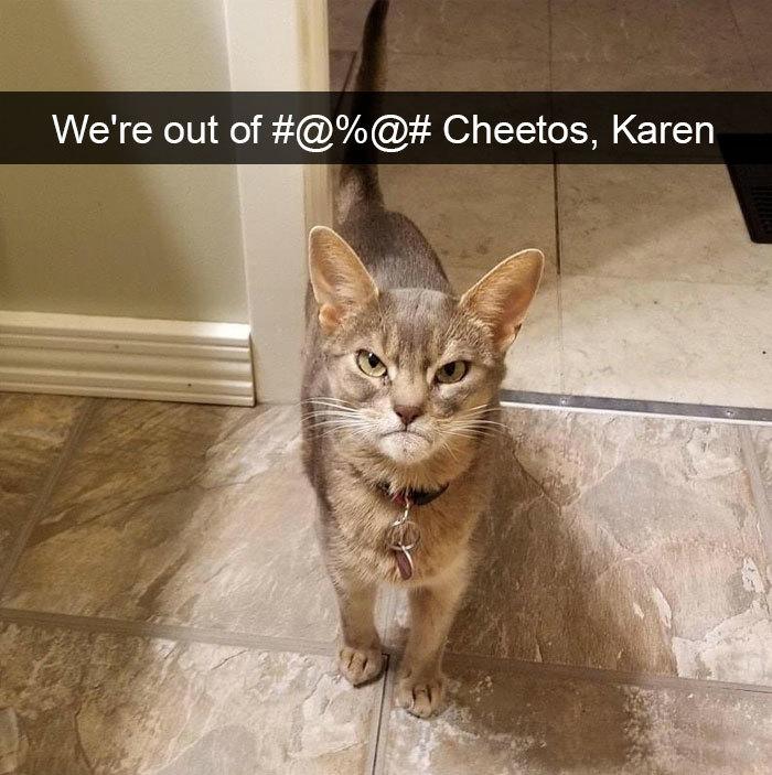 hilarious cat snapchats angry