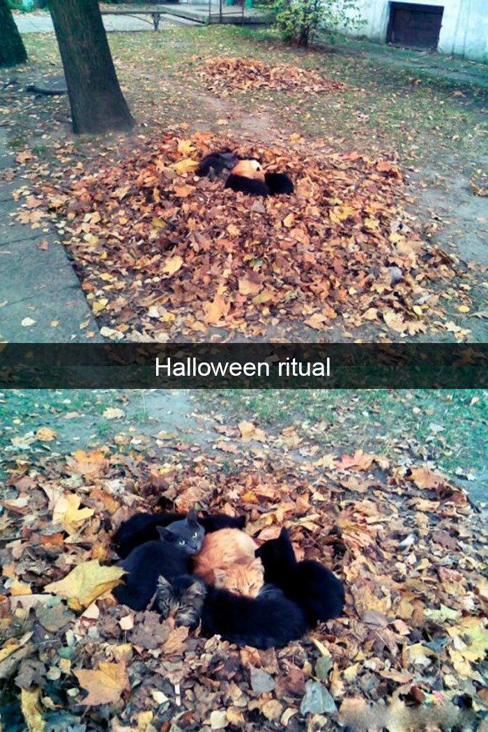 hilarious cat snapchats halloween ritual