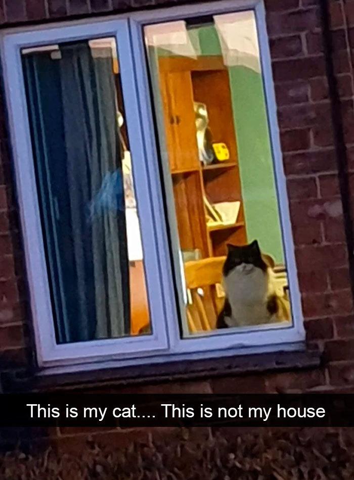hilarious cat snapchats wanderer